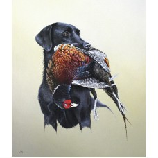 Labrador & Pheasant